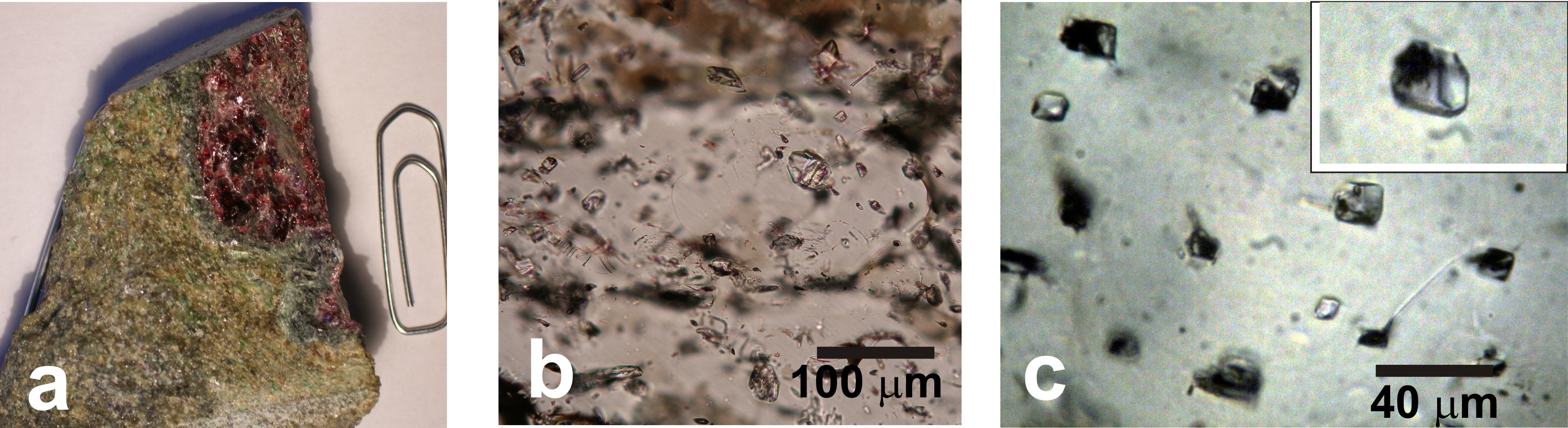 a: coarse garnet crystal in garnet peridotite from Cima di Gagnone plate interface mélange. This peridotite derives from dehydration of former serpentnite and this garnet represents a high-pressure (3 GPa) conduit for fluid flow in this rock. B: photomicrograph showing a view of the corse garnet hostin plenty of polyphase inclusions representing the fluid circulating in the garnet peridotite and released by the dehydration event at 3 GPa. C: close view of the solid polyphase inclusions.